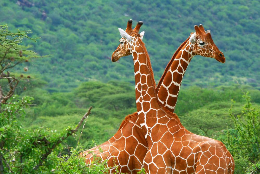 Kelionė į Keniją (egzotinės kelionės) 01