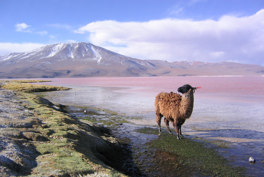 Kelionė į Boliviją (egzotinės kelionės) 1