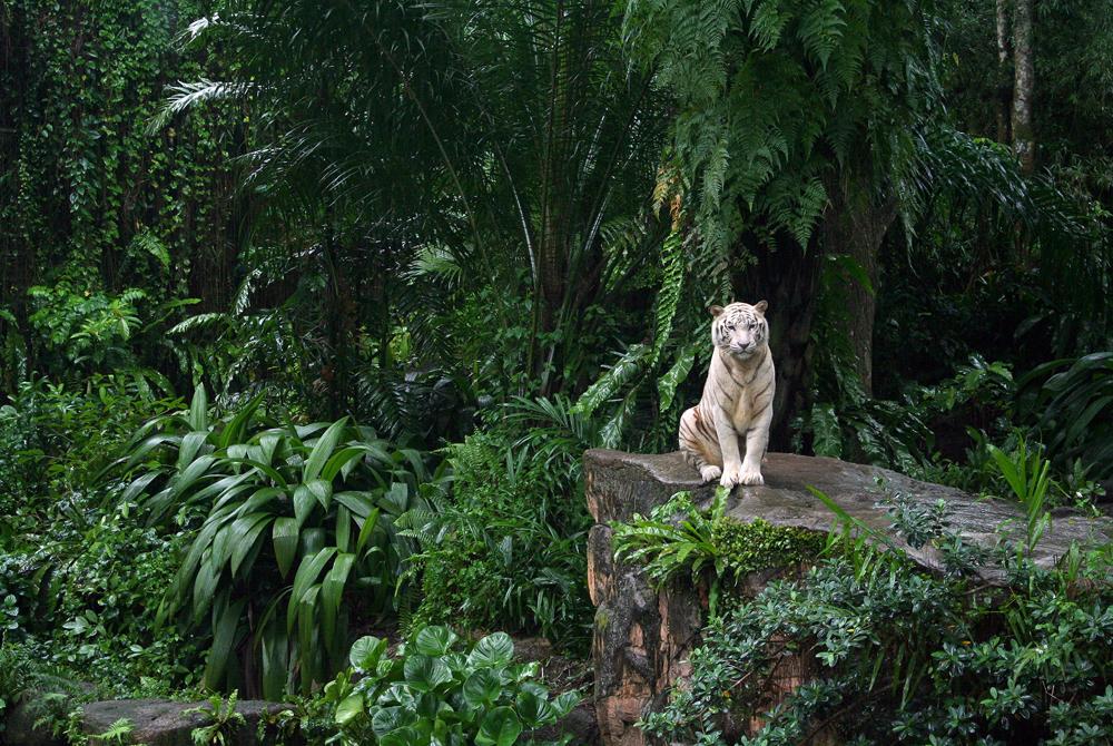 Kelionė į Vietnamą (egzotinės kelionės) 9