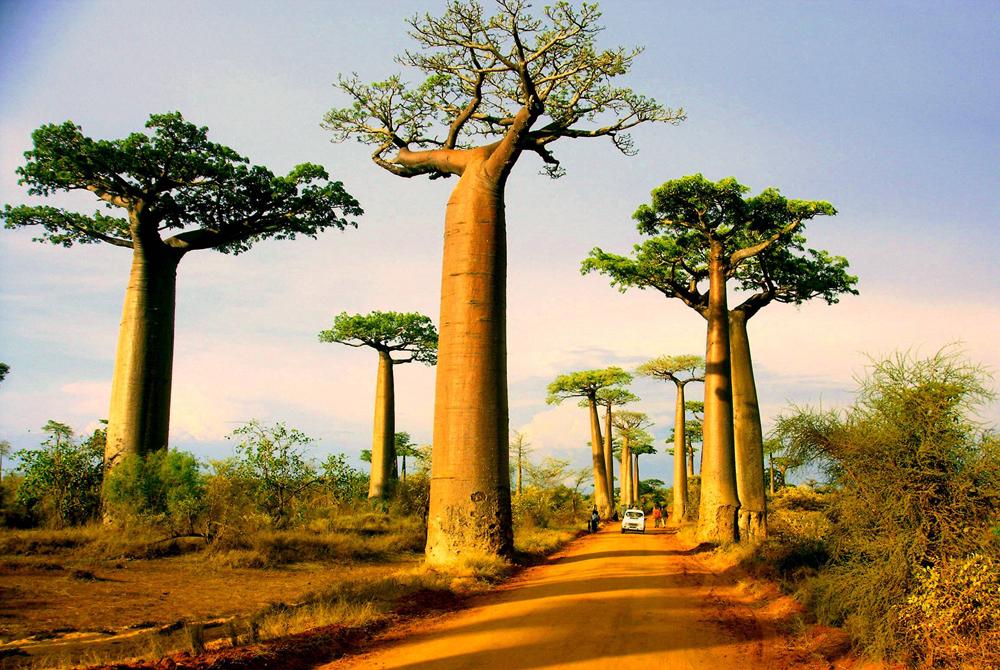 Kelionė į Madagaskarą (egzotinės kelionės) 18