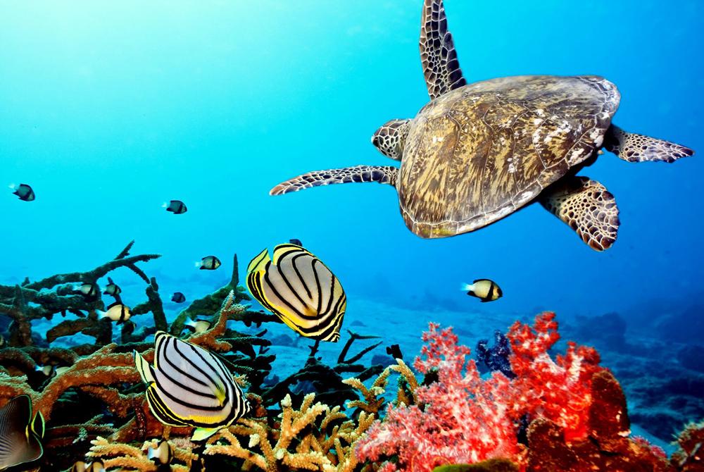 Kelionė į Bora Bora (egzotinės kelionės) 3