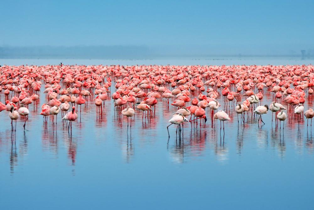 Kelionė į Keniją (egzotinės kelionės) 42