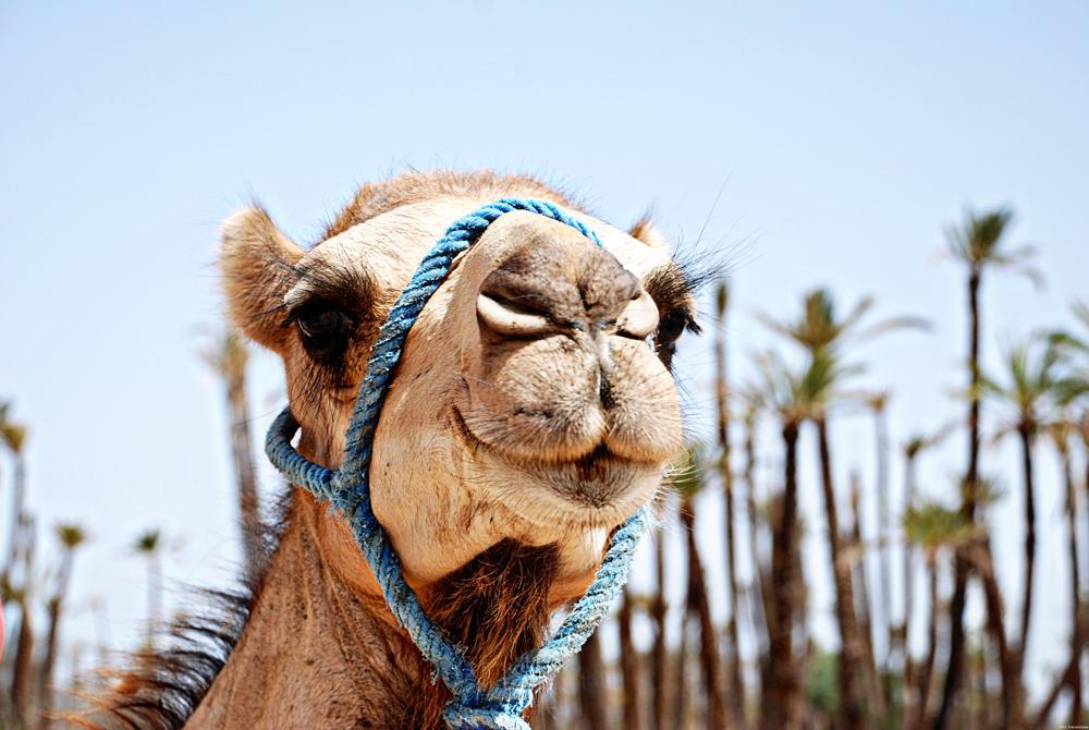 Kelionė į Maroką (egzotinės kelionės) 4