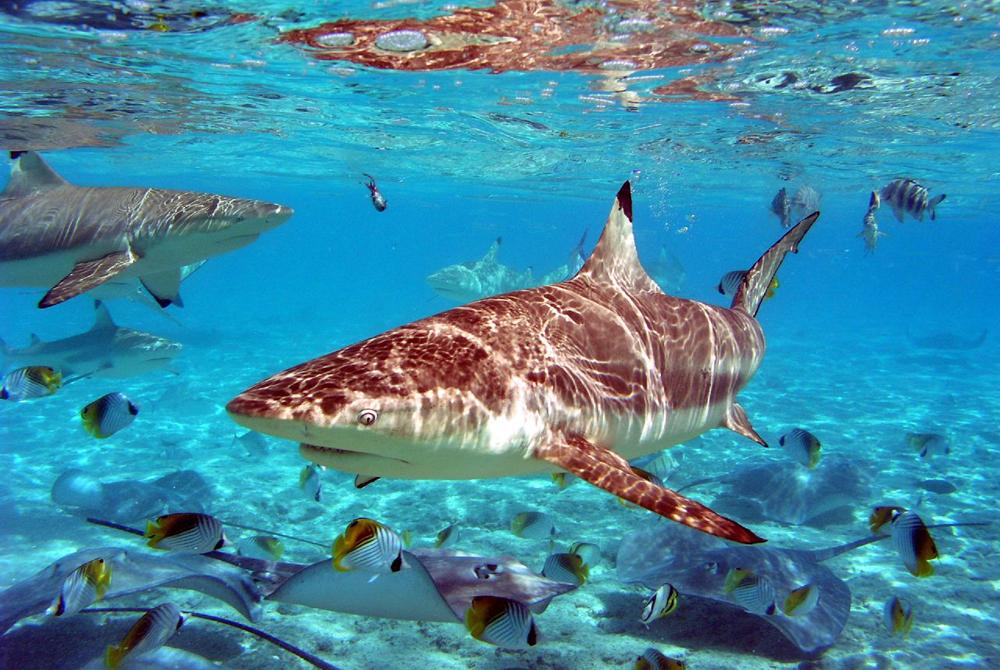 Kelionė į Bora Bora (egzotinės kelionės) 45