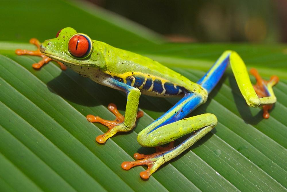 Kelionė į Kosta Riką (egzotinės kelionės) 7