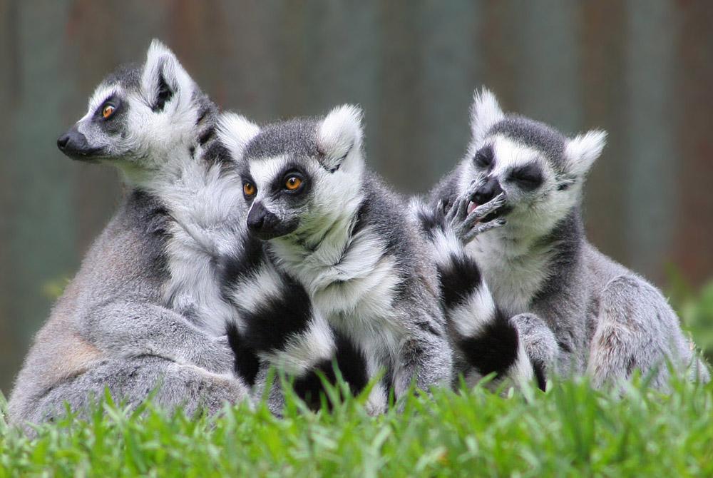 Kelionė į Madagaskarą (egzotinės kelionės) 31
