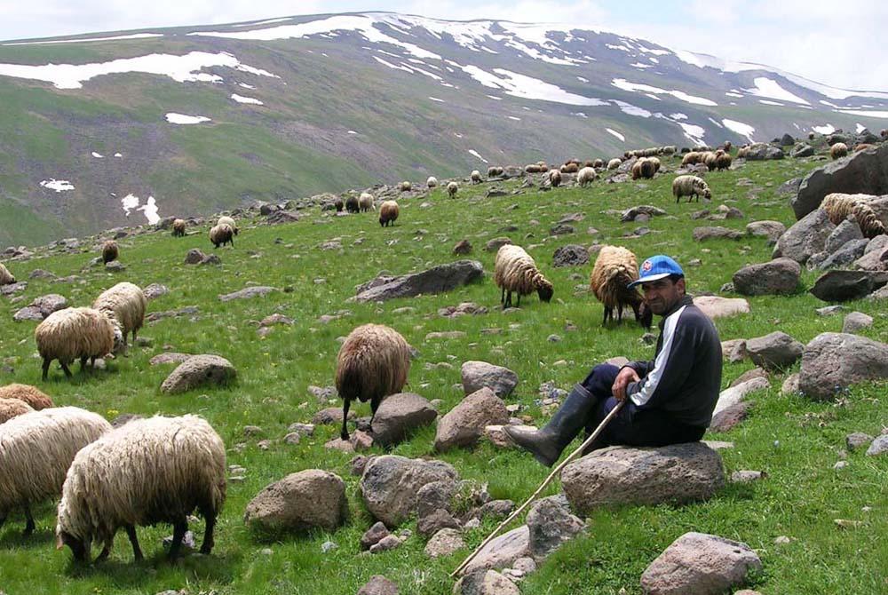 Armenija (25)